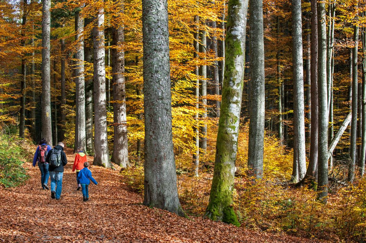 Гулять в лесу